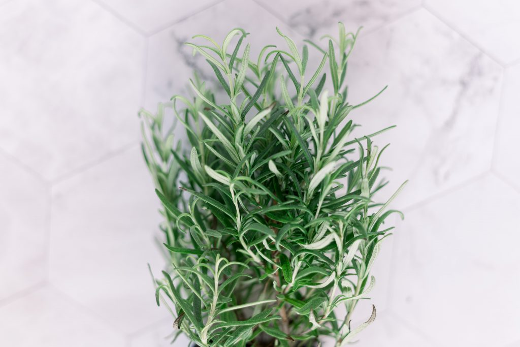 Discover How Rosemary Essential Oil Is One Of The Best